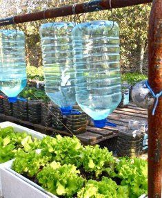 Recycled Bottle Drip Irrigation