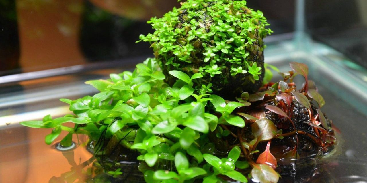 Indoor Water Garden Wabi Kusa