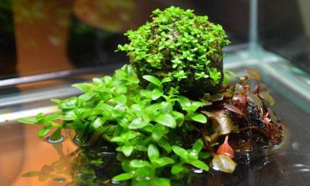 Simple Indoor Water Garden: Wabi-Kusa