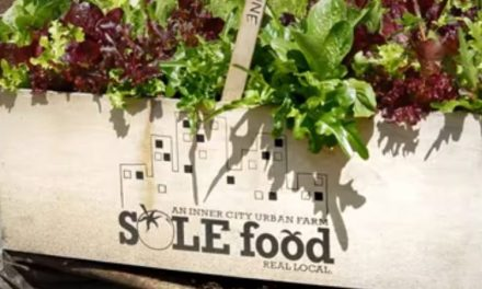 Help Sole Food Farms Grow