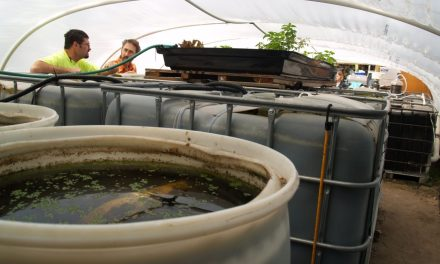 Urban Farming Pioneers: Growing Food & Futures