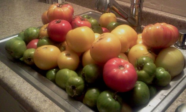 Do Tomatoes Need Pruning?