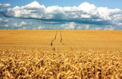 UN Report Exposes Feed the World Myth