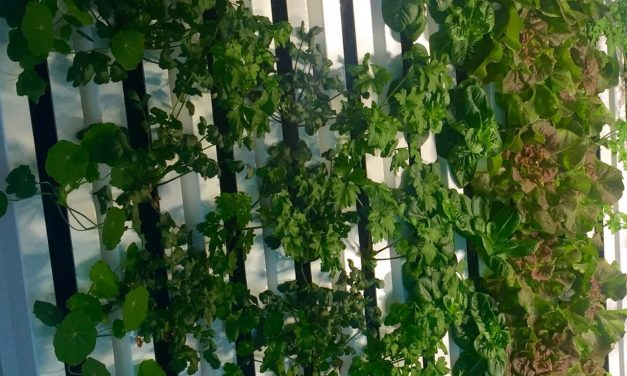 Kimbal Musk: Urban Farm Accelorator