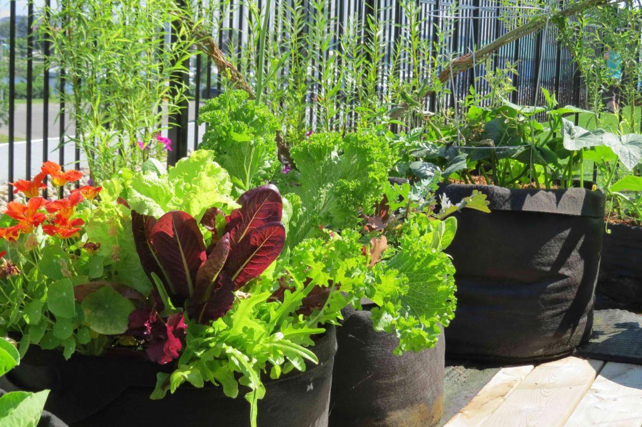 Smart Planting In Fabric Pots Garden Culture Magazine