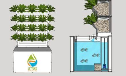 The Urban Garden Evolves
