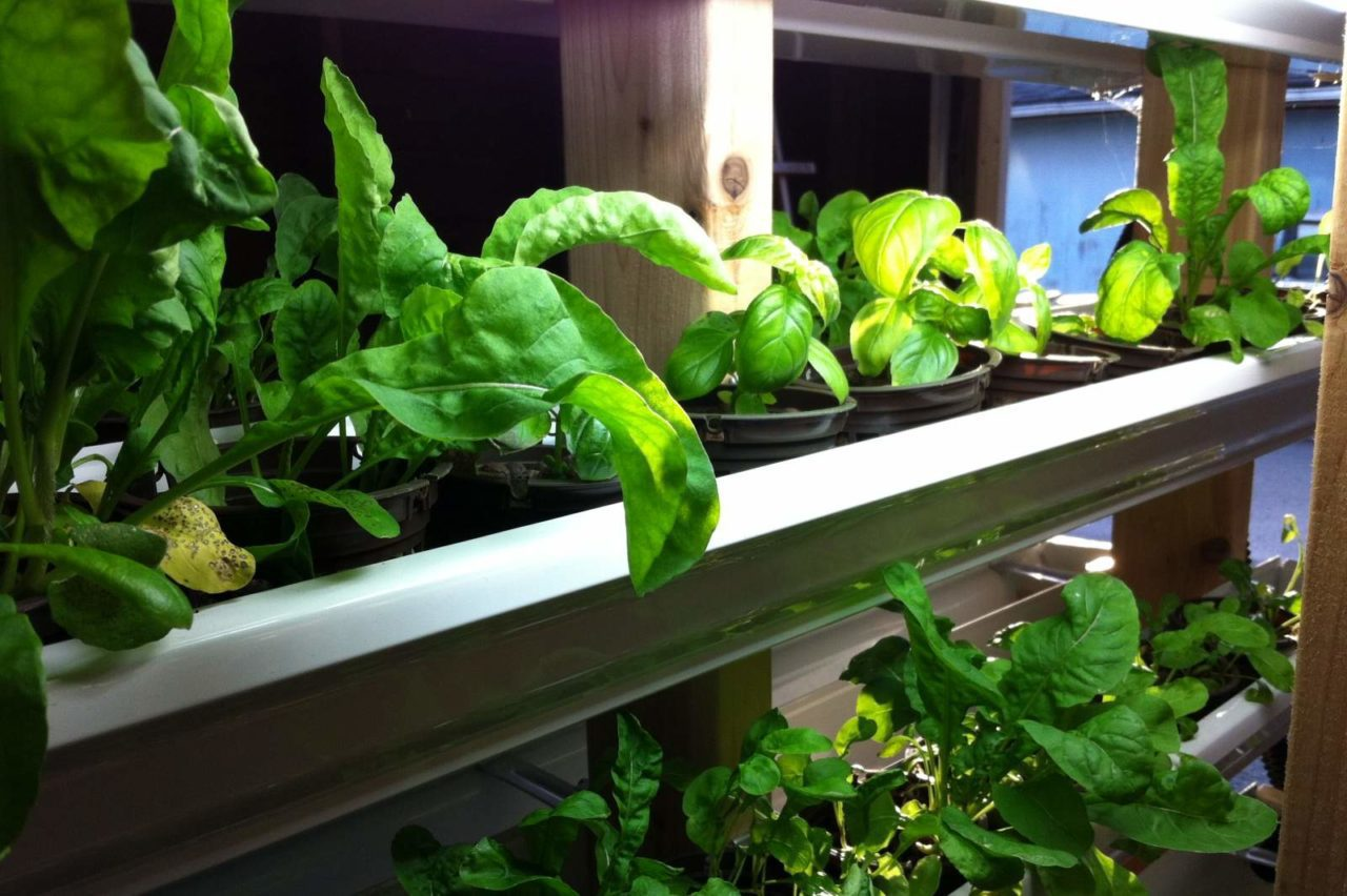 Hydroponics Herb Garden Kitchen Freshwater Shrimp In Aquaponics