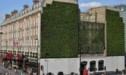 Vertical Garden: Big Ideas Sprouting Everywhere