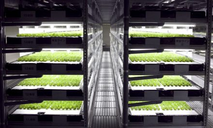 Hydroponic Robot Farming Goes Live