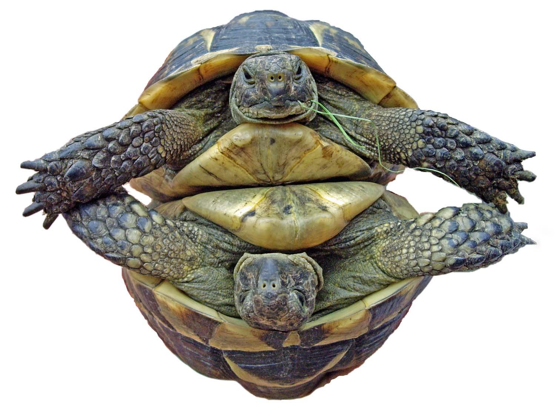 Turtles Amp Tortoises Garden Delights Arts Amp Crafts