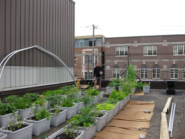 vegetable roof garden Vegetable Roof Garden - Gallery | Garden Design
