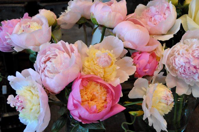 Peonies And Garden Roses Gallery Garden Design