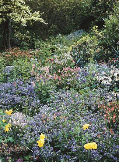 Columbine Flower | Garden Design