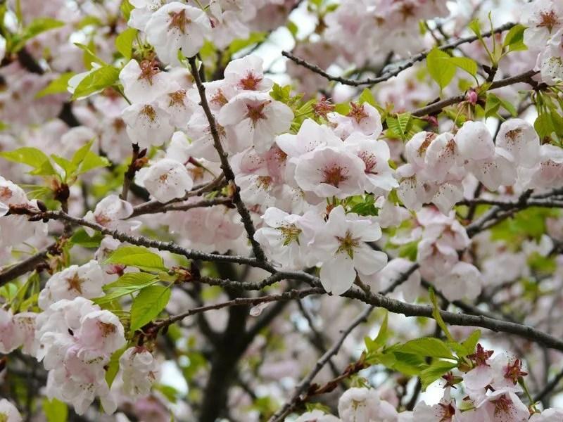 Best Japanese Garden Design