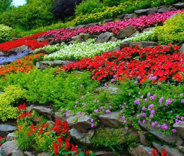 Colorful Flowers Terraced Hillside Garden Design Calimesa Ca