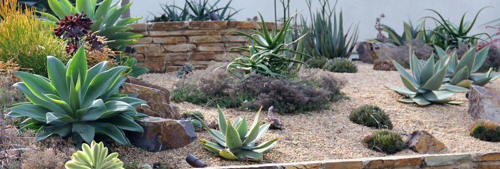 Softscape ... - Garden Design & Landscapes