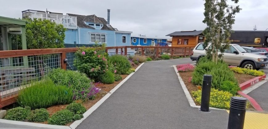 Perennial planting on newly paved path