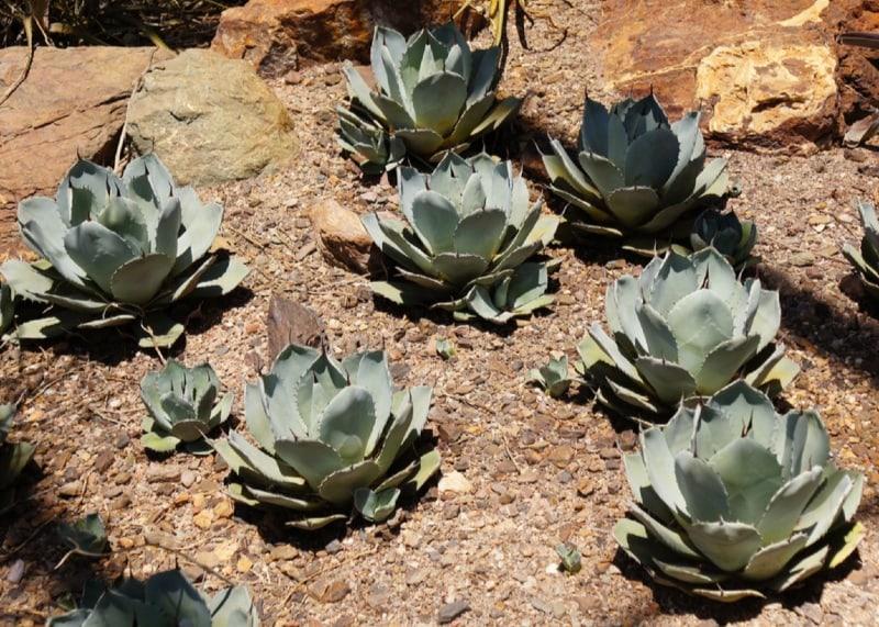 B Q Indoor Plants