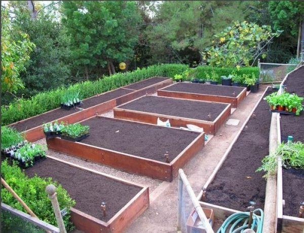 Free Vegetable Garden Layout, Plans and Planting Guides on Backyard Layout Planner id=43864