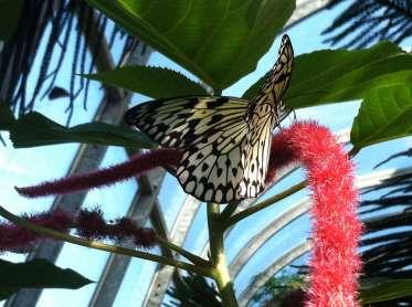 Paper Kit Butterfly