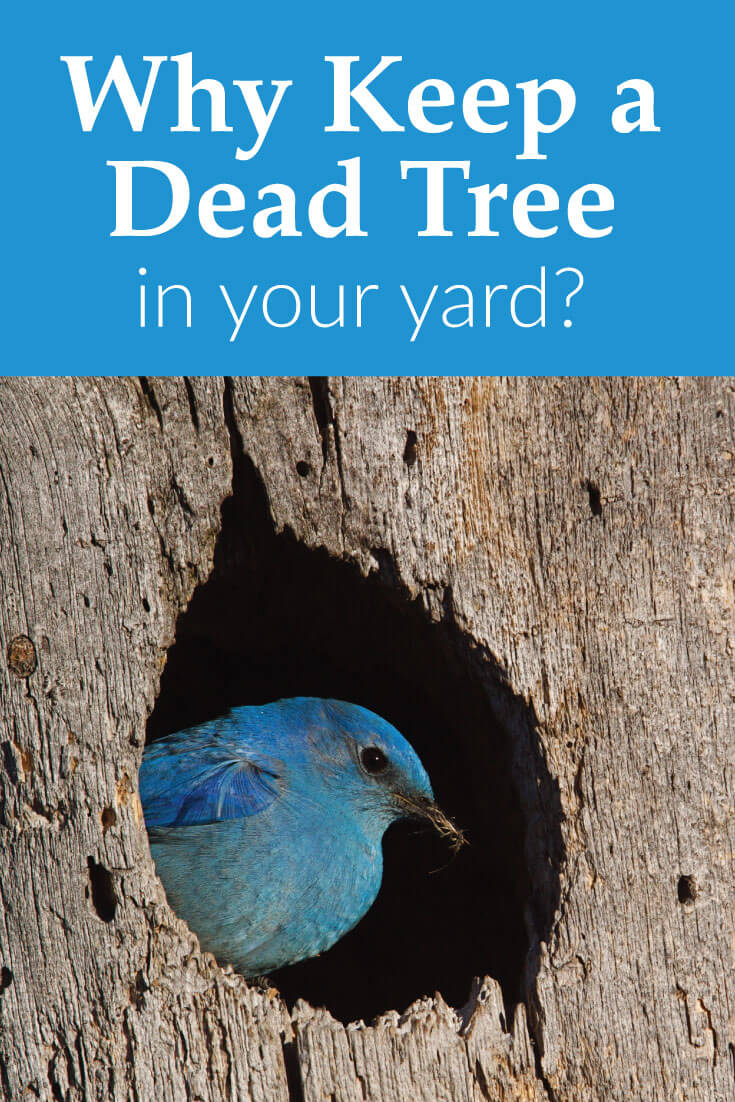 why keep a dead tree in your yard