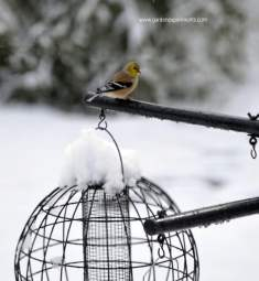 Bird perched on the pole in winter