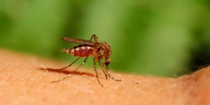 How to Reduce the Number of Mosquitoes in Your Garden