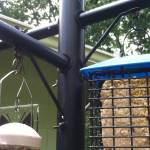 Squirrel Stopper System Bird Feeder Pole