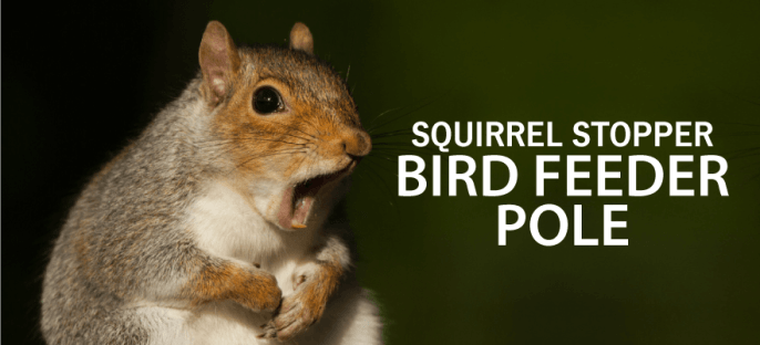 squirrel-stopper-feeder-reviews