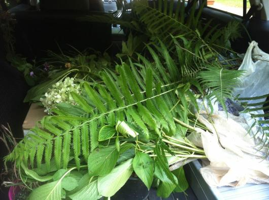 My trunk full of cuttings