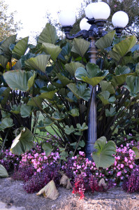 Planting around light pole