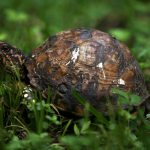 Backyard Wildlife: The Critters in My Garden