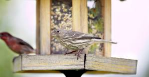 Winter Garden Project: Count Birds at Your Feeder This Winter to Help Track Bird Populations