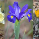 Guide to Planting Spring-flowering Bulbs in Fall