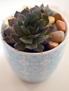 Recycle Chipped Teacups into Planters