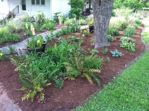 This pecan was incorporated into a bed which includes hostas, ferns, and some containers