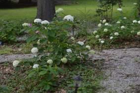 Shade garden path and shrubs