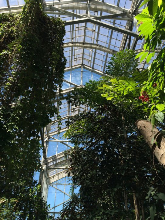 Roof of the conservatory