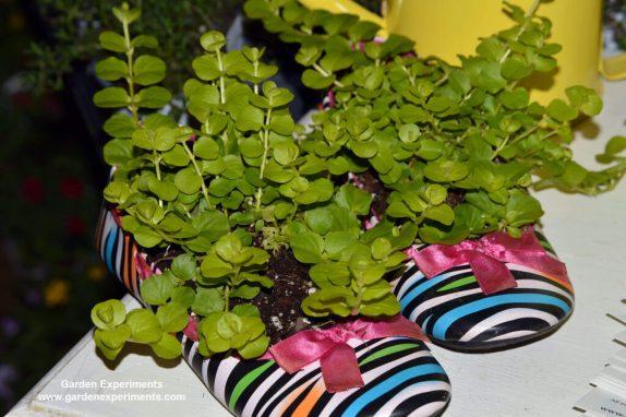Shoes made into a planter