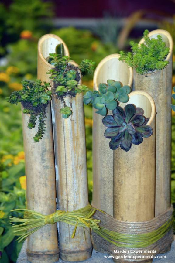 Upright bamboo bundled together as a planter for succulents
