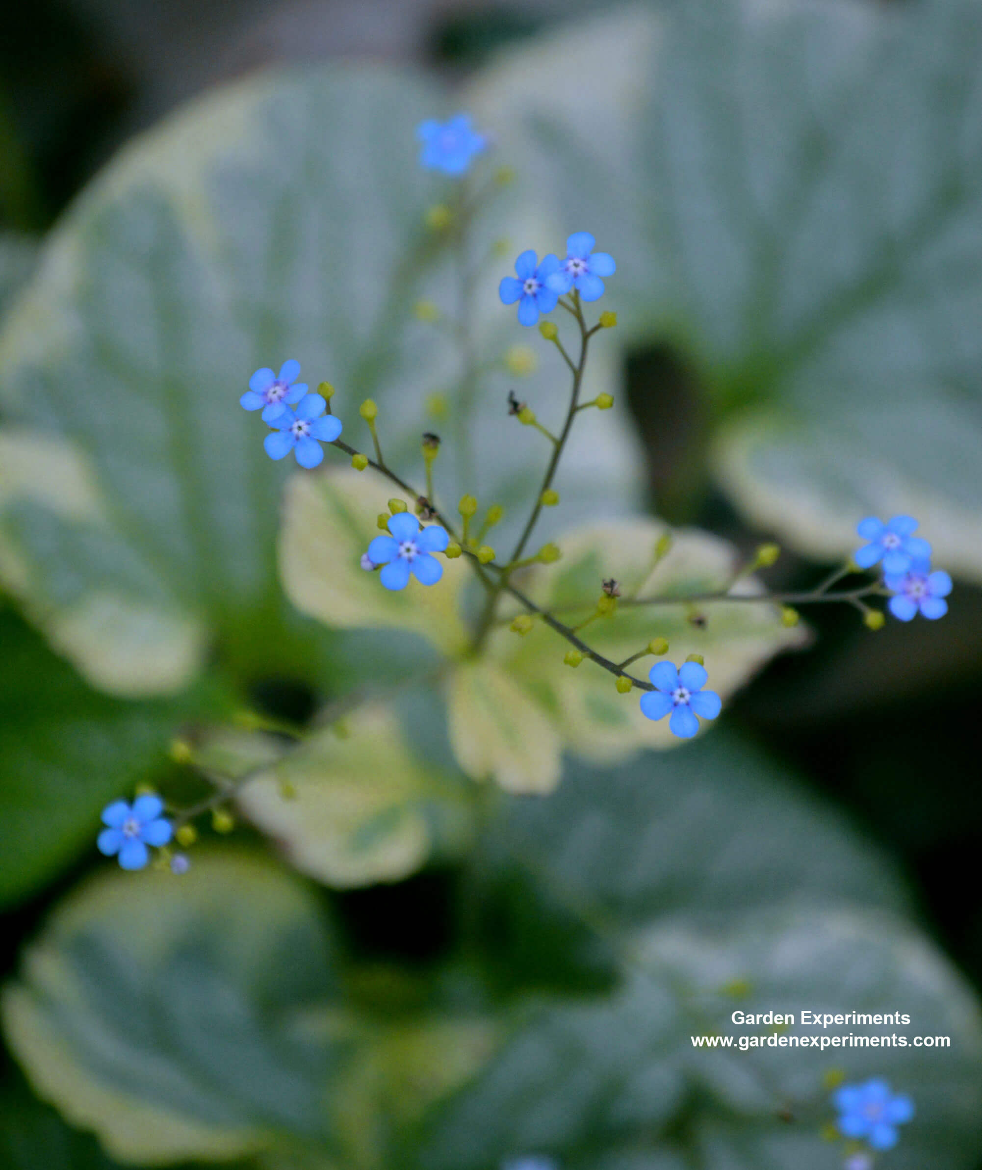 10 Plants for Shade Gardens: Plants Grown for Flowers, Leaf Colors ...