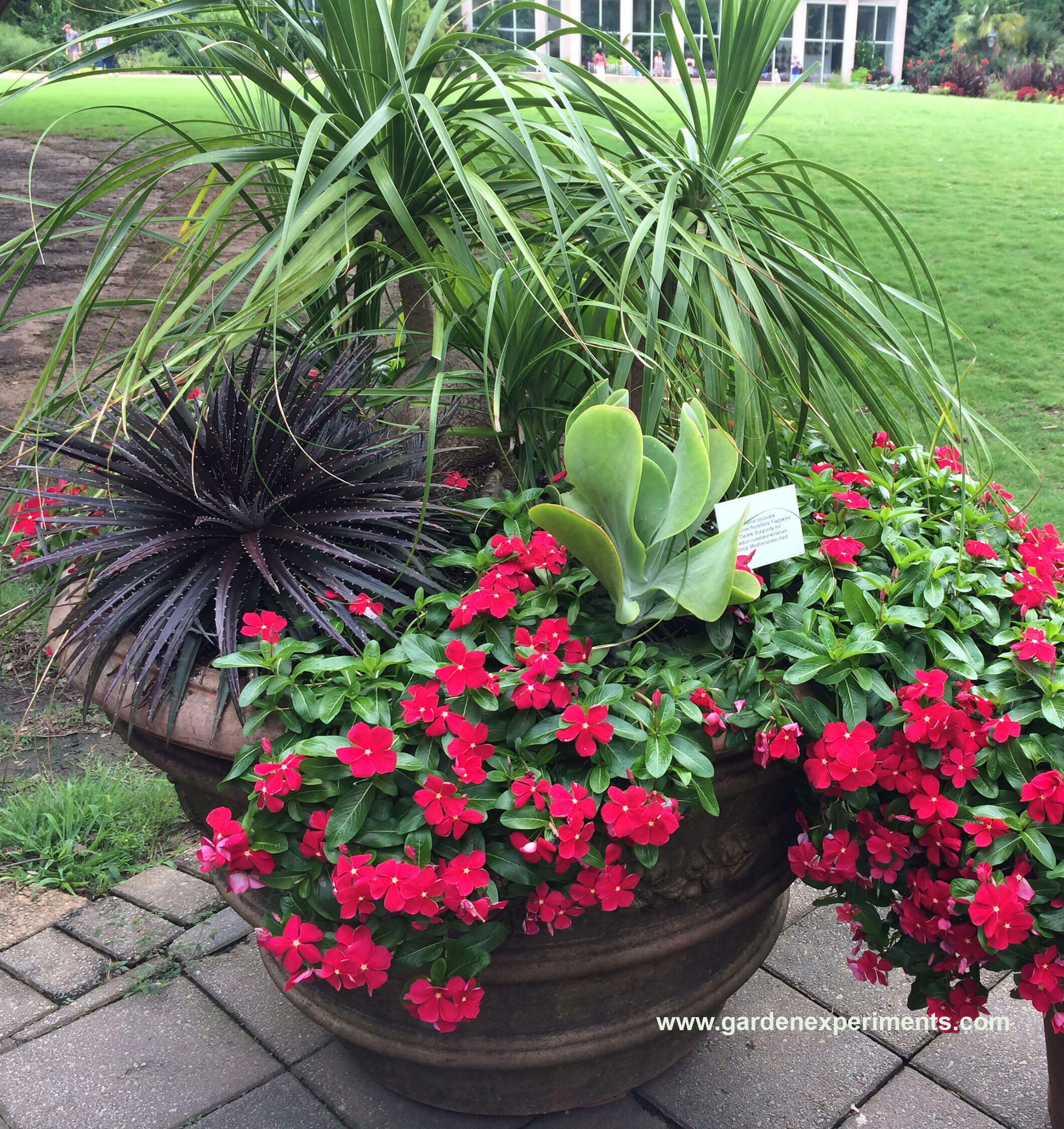 Container Garden Ideas: Ideas For Container Gardens