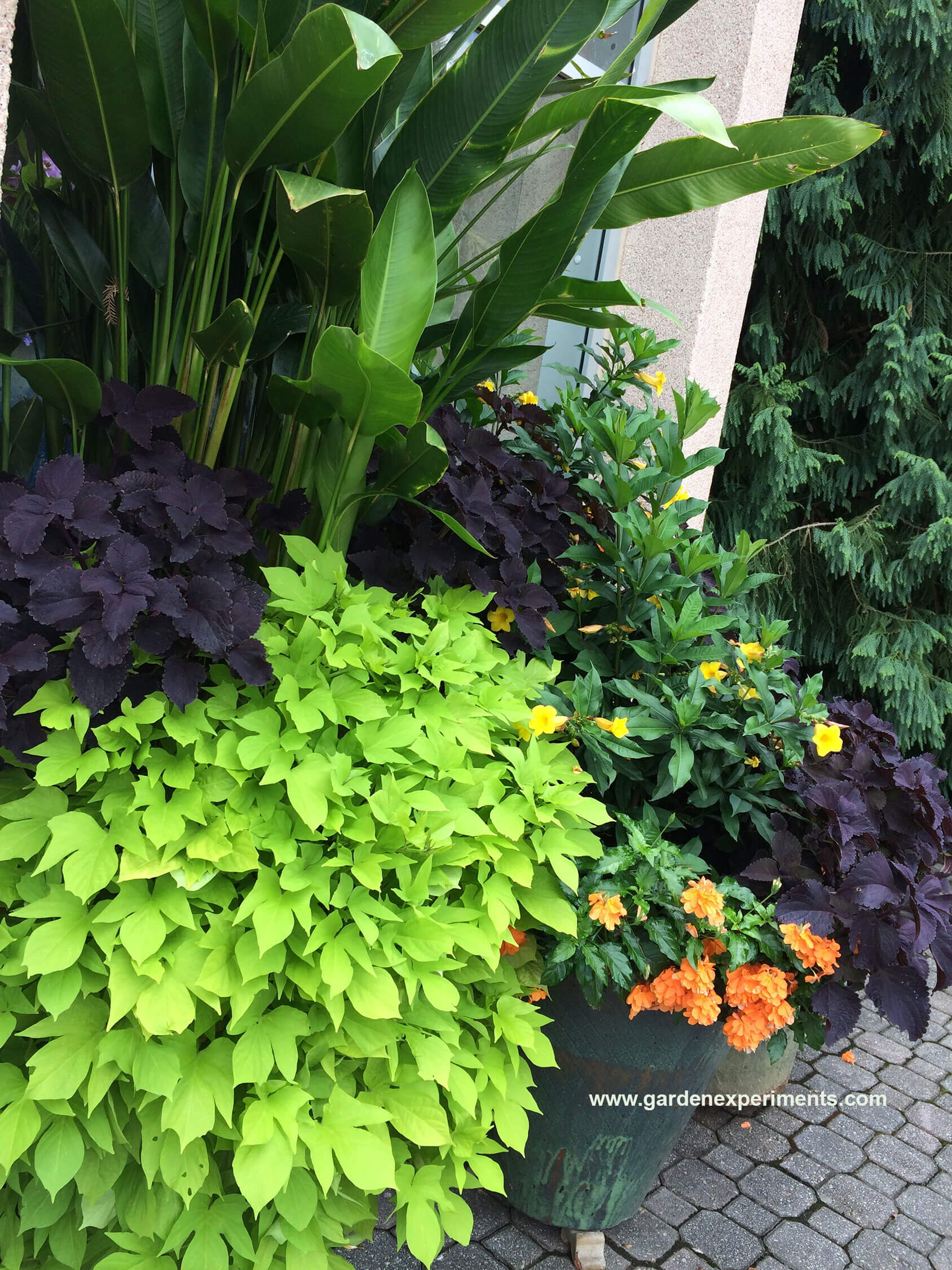 Container Plants and Flowers Color Combinations