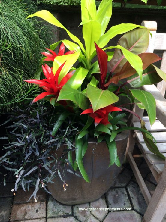 Container garden with tropical plants