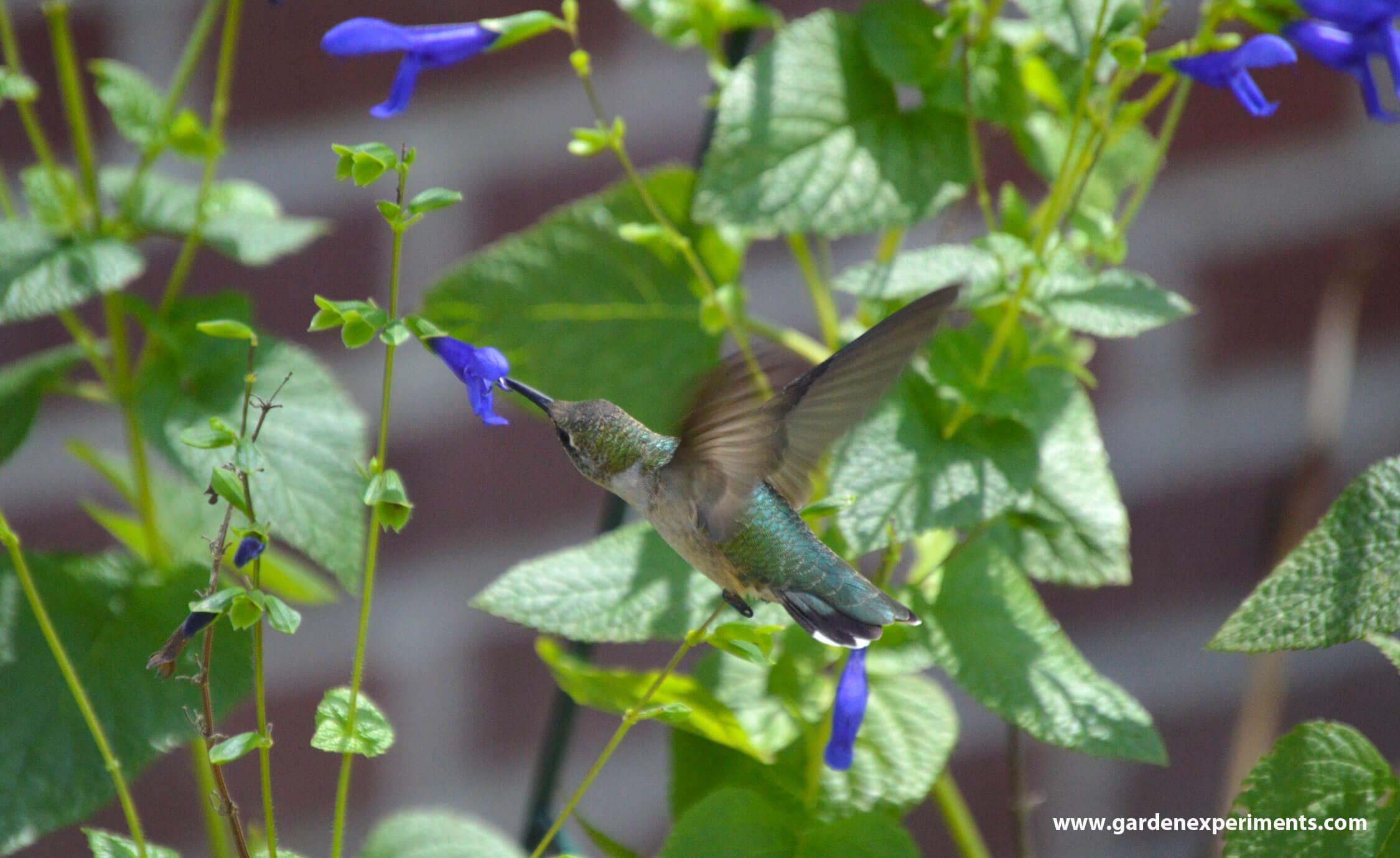 Hummingbird Food Recipe Brown Sugar