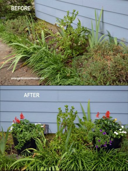 Adding color to a garden with poor soil using container gardens