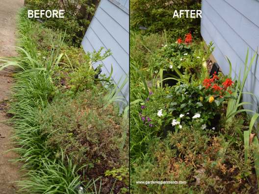 Container gardens to add color in spots with poor soil