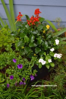 Container garden full sun