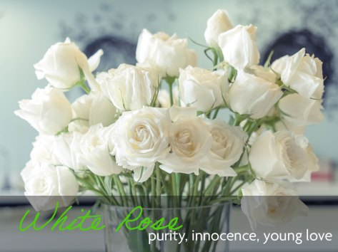 A bouquet of white roses which means purity, innocence, and young love