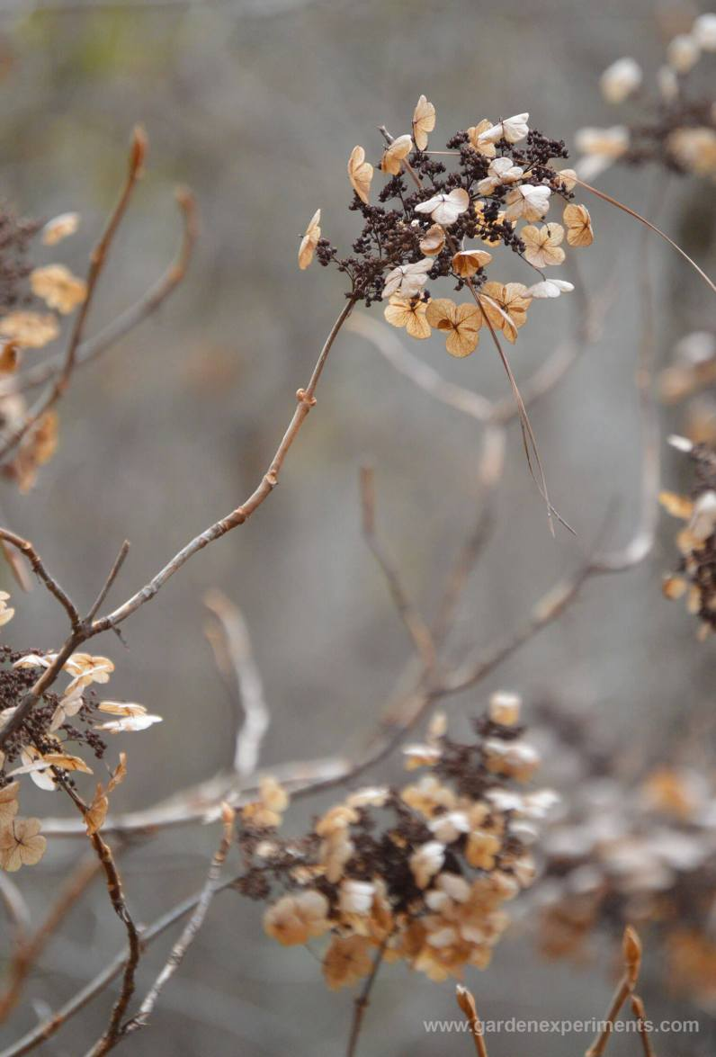 The dried flowers in winter (wild shrub in the woods)